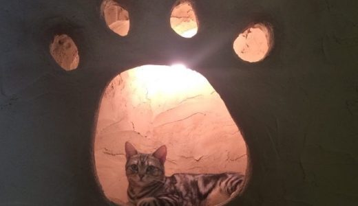 【東京/吉祥寺】猫カフェ てまりのおうちの予約や利用方法をご紹介!
