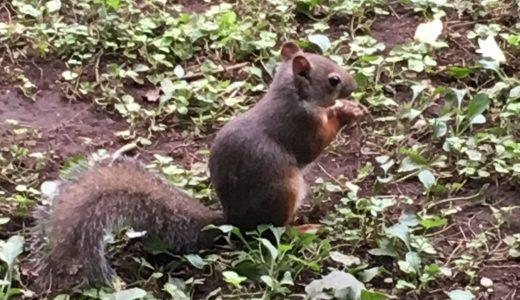 井の頭公園の動物園でデート♡無料の日の混雑は?モルモットやリスに癒される!